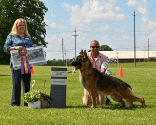 Best of Breed Memorial Day 2018 under Judge Bobbi Kindy